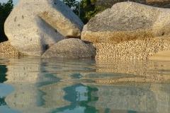 piscina-naturale-biodesign-195